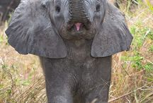 elephants geraffs