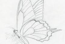 Henry's butterfly