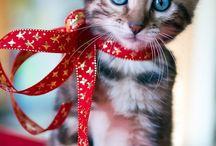 Christmas pets / Chats et chiens a Noël