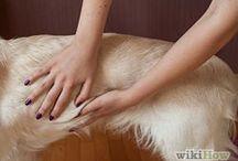 Dog bath / Natural products