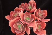 Echeverias-roses of the desert
