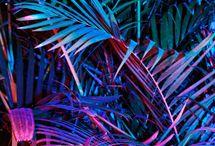 neon pasific
