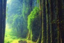 Caminos y bosques llenos de encanto
