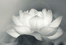 Lotus tattoo rug