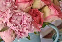 bydlení s růžemi