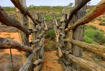 Cattle Stations