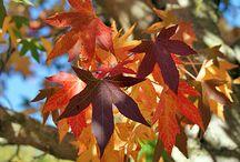 NZ Autumn