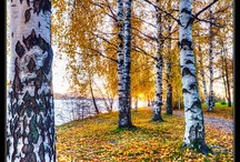 Syksy/ Autumn