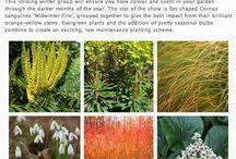dessin végétaux, photos et schéma plantation