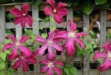 Flowers & Gardens / by Debbie LaMay