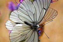 insekter og blomster