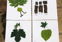Diy Leaf Craft
