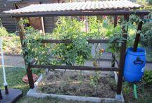 *Tomaten Dach