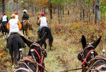 Sporting & Hunting Properties