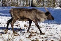 Zoo de la Chaux-de-Fonds / L'actualité en images sur le Zoo de la Chaux-de-Fonds (Suisse)