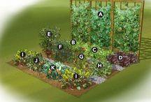 Sustainable Food / Edible gardening, urban farming, eating local