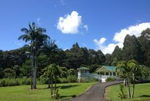 Chocolate  / Benefits of dark chocolate, Brain boosting chocolate & my own Hawaii cacao plantation