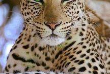 Animais belos