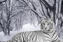 Cold Season ⛄❄