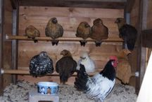 ...my farm... / Animals I want, farming need to knows and projects.