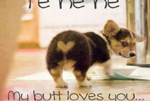 Dog are cute / Love dogs