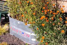 Galvanized Planters / Gardening
