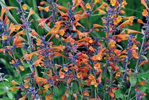 Sun Plants for Fall / Charming sun-loving plants add color, texture and dimension to your sunny garden spots. These annual or perennial plants perform when they receive at least 4-6 hours of direct sunlight (of course, the more the merrier). They are also highly versatile in the garden, suitable for your favorite containers, borders, as well as other bed locations. Plant a few alongside the curb or driveway for an eye-popping show of color, or as a charming focal point anywhere!  Available at MichiganBulb.com