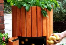 Potato barrel / Tuin