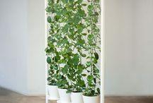 DIY Pflanzen: Ranken