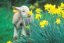 Animals: Livestock / by Anita Wood