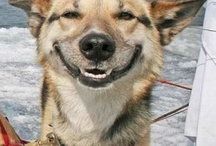 Dogs That Make Us Smile