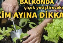Bahçe_bitki