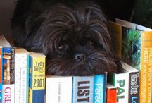 """Affenpinscher / The Affenpinscher's apish look has been described many ways. They've been called """"monkey dogs"""" and """"ape terriers."""" The French say """"diablotin moustachu"""" (mustached little devil), and """"Star Wars"""" fans argue whether they look more like Wookies or Ewoks. Though standing less than a foot tall, these sturdy terrier-like dogs approach life with great confidence. As with all great comedians, it's their apparent seriousness of purpose that makes Affen antics all the more amusing."""