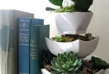 Plants for indoors / by Julie Knobbe