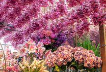 Flowershop / by Maya Torres