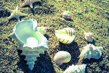 Velas de mar