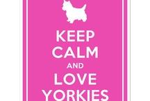 Yorkies