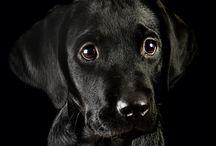 Just dogs / by Jill Blais