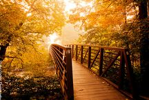 Inspirations : Photography : Autumn / Lovely photographic inspirations...Warm autumnal colours...