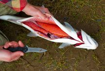 How to Clean a Fish (I use a box cutter on cat fish. The blades seem to dull fast and the razors are easy to