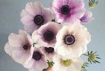 .brandon flowers