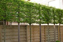 Pleached Trees and Living Walls