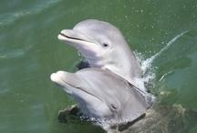 Dolphin News