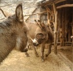 Donkey Pictures Around the World