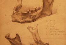 анатомия череп