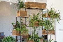 modüler bitkiler
