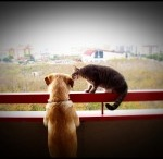Cat-Dog Love / by Tamar Arslanian