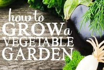 Organic Gardening 101 / Start your own organic garden with these helpful tips and tricks!