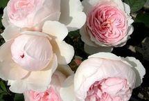 Blomster / Jeg elsker blomster,alle farver og former.De er livets skønhed for øjne og sjæl.