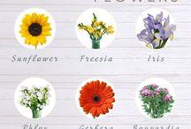 florii de vara